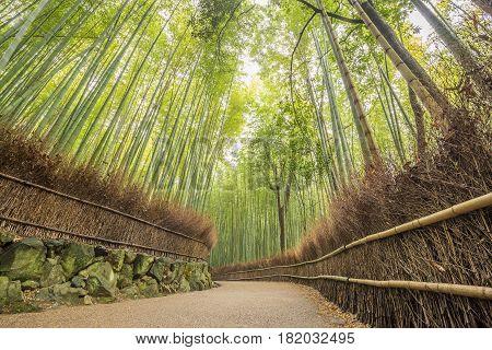Path to bamboo forest(bamboo groves ) at Arashiyama Kyoto Japan.