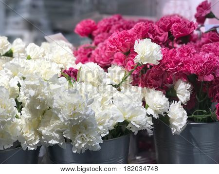White and pink Carnation in zinc bucket for background - selective focus