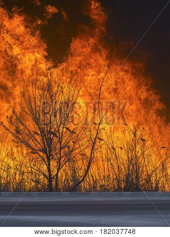 A dangerous fire swept the forest near the road