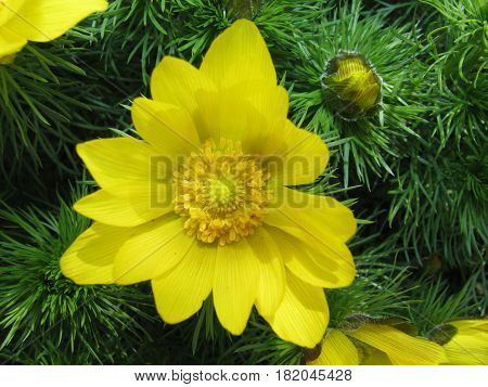 Colorful Yellow Flower On A Green Background.