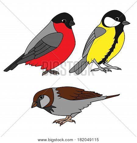 Small urban birds set on a white background