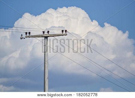 Closeup of concrete electric pylon and flying bird near it