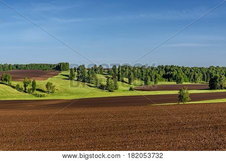 Beautiful agricultural landscape with furrows on a brown plowed field green meadows and birches on a background of blue sky