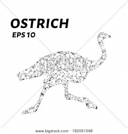 The Ostrich Consists Of Points, Lines And Triangles. The Polygon Shape In The Form Of A Silhouette O