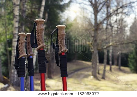 Closeup of Nordic walking poles, on forest trails background