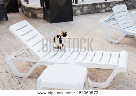 Cute cat sitting on white chair near pool, sunny.