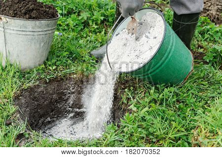Planting fruit trees. A man is adding a ashes into a pit to fertilize a soil before planting tree.
