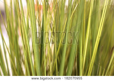 Close up of fake tall green grass.