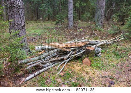 Small stack of firewood prepared lying in coniferous stand, Bialowieza Forest, Poland, Europe