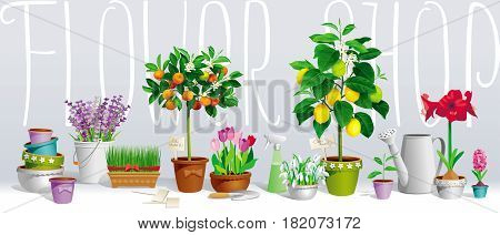 Big collection of the pot plants citrus trees flowers and garden tools