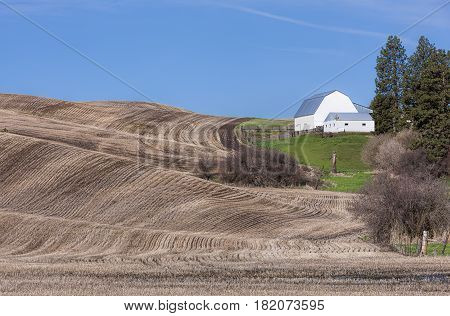 A barn is shown as small alongside a large farm field in the Palouse region of Washington.