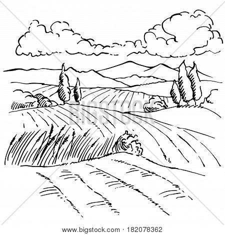Landscape ink sketch drawing. Rural engraved landscape with plowed fields, cypresses and pine tree.Countryside landscape with hills, fields, trees.