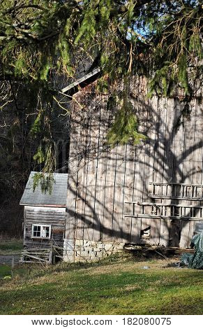 Shadow from a tree upon the side of a barn.