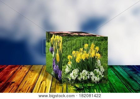 3D Cube flower,Petunias, Yellow daffodil,pansies, snapdragon and marigold, beautiful flower green grass background hearth