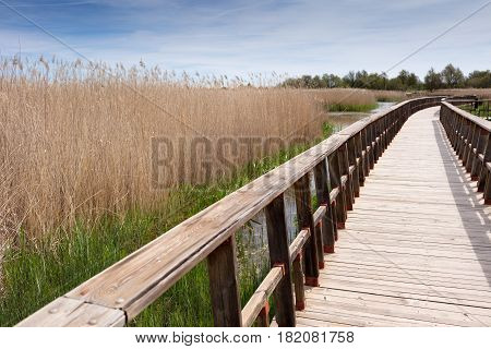 wooden bridge on a swamp with reeds on the sides. Natural spanish park Tablas De Daimiel