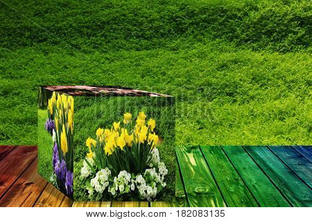 3D Cube flower, Petunias, Yellow daffodil, pansies, snapdragon and marigold, beautiful green grass background