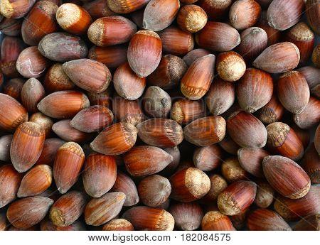 ripe hazelnuts fruit texture nature background pattern