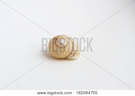 Beautiful Sea Shell On A White Background