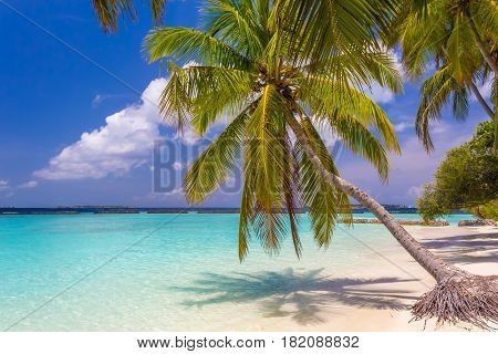 Coconut palm tree at dreamy tropical beach in Maldives