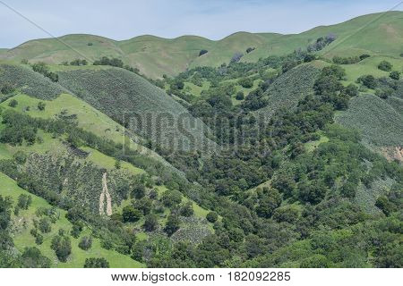 Rolling Hills and Crevices: lush green hills, with crevices and other features