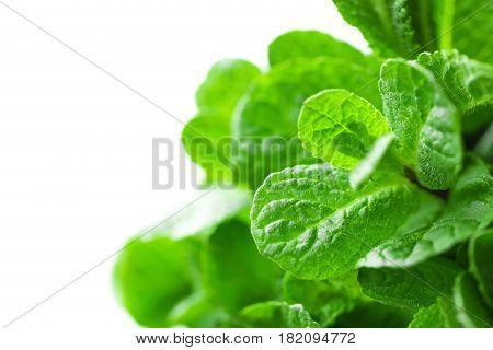 Fresh green mint leaves on white background closeup
