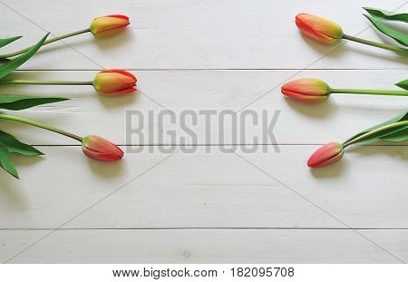 Red tulips on a white wooden background