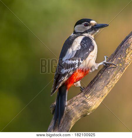 Woodpecker Perched On A Pole