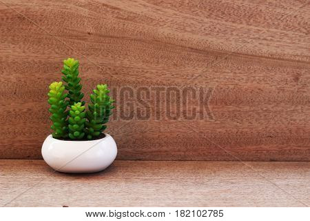 A small ornamental plant in a white pot is placed on a brown table