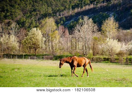 Lonely horse equine in an open grassy field meadow