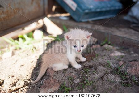 Funny Red Kitten Sitting On The Ground