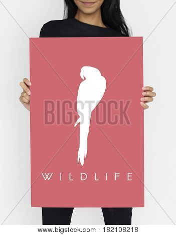 Animal Wildlife Word with Parrot Graphic