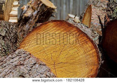 Wood texture grunge background wood frame texture