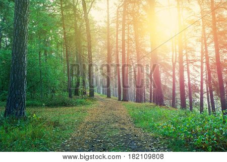 Beautiful sunrise in forest. Country road in beautifull foggy forest.