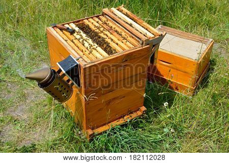 Langstroth beehive inspection with chisel and smoker