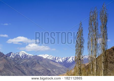 Scenary Of Leh With The Himalaya Mountain In The Background In Ladakh, India