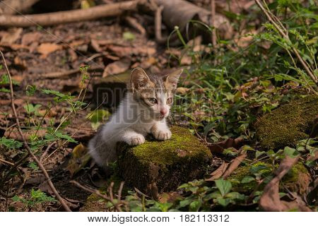 gray white cat look some thing. Cute cat cat lying on the stone in the background blurred close up playful cats cats relaxing vacation, cute cat in wild