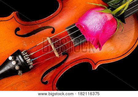 Old violin and red rose on black background.