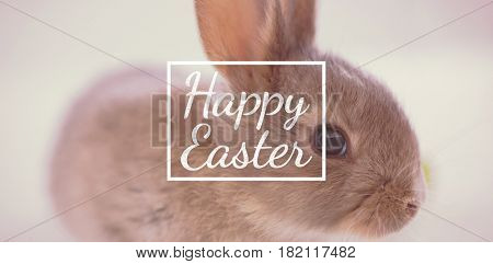 happy easter against easter bunny on white background