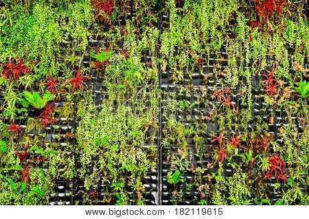 Wonderful urban vertical gardening eco design. Green and red plants growing on wall. Amazing bio wall and mini-ecosystem. Landscaping in Singapore.