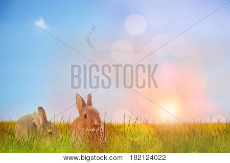 Close-up of Easter bunny against flock of bird flying over field