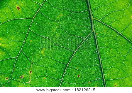 Close up fresh green leaf texture macro background