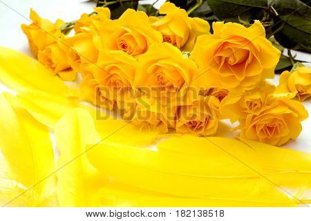 Yellow feathers next to yellow rose flowers