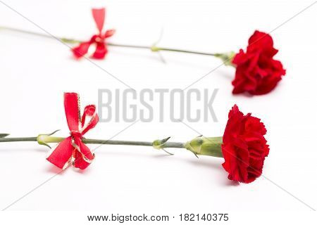 Two red carnations with bow on white background