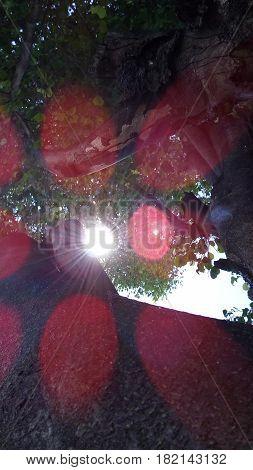 Árbol, Reflejo, Sol, Tarde, Parque, Naturaleza, Hojas