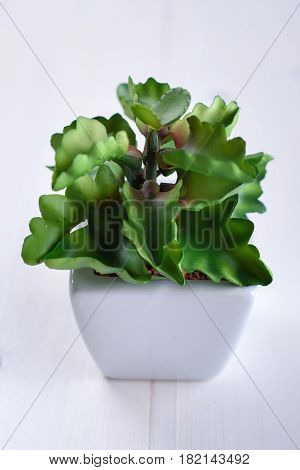 Green houseplant in a white pot on a white background