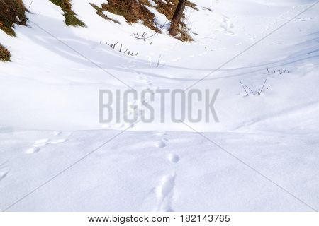 Human footprints on ground covered with white snow