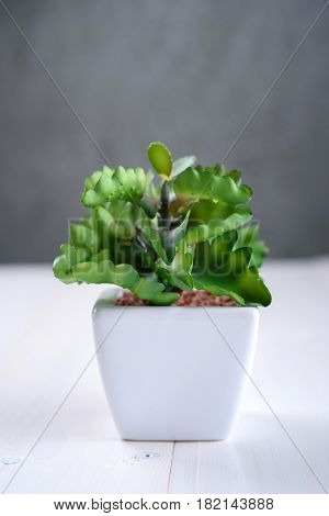 Green houseplant in a white pot on the table