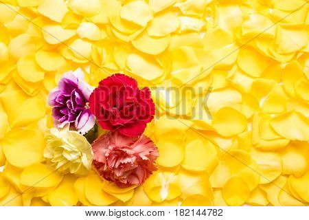 Carnation flowers on a bright yellow rose petals