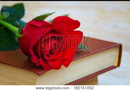 Old books with red rose traditional gift for Sant Jordi the Saint Georges Day. It is Catalunya's version of Valentine's day celebrated on 23rd of April.