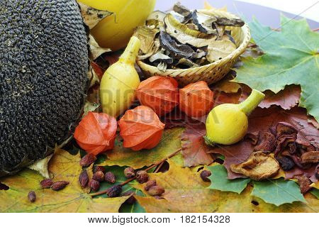 Still leaves fall and pumpkin on a table